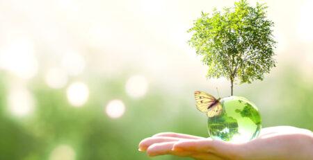 Hand hält Glaskugel mit Schmetterling und Baum